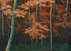 Colorful Woods by AldemButcher