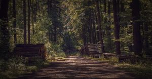Forest track by Robsonbillponte666