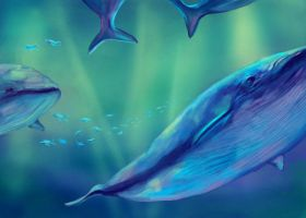 Whales by Scout73