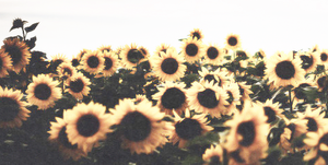 TWITTER HEADER: Yellow by CariitoEditons