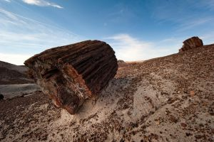 Petrified Trunk by jamezevanz
