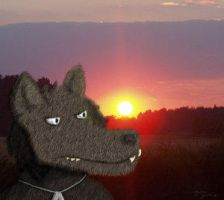 Sun sets on every wolf by Anthrolicious