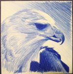 Harpy Eagle by Decayingyouth