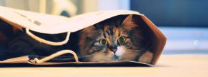 cat in the bag by ReaLStaR