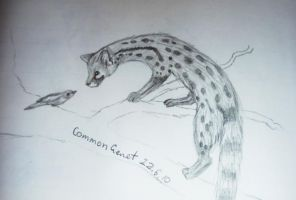 Common Genet by walrusbukkit
