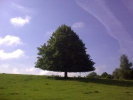 A Triangular Tree by peasinthepot