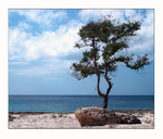 A Tree by the Sea by f0rTyLeGz