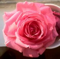 Last Rose of the Year by Phaedris