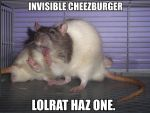 Lolrat haz cheezburger by Kaikoura