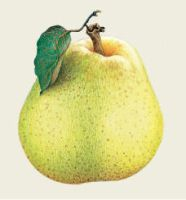Little pear by IaIaCom