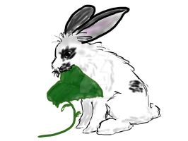 Rabbits Habits by exintrovert