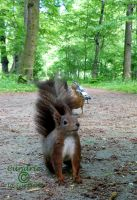 Squirrel 77 by Cundrie-la-Surziere
