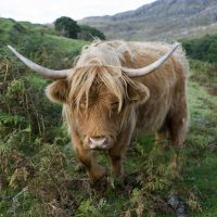 Heilan' coo by gdelargy