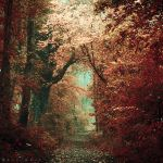 a fool's paradise by Oer-Wout