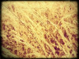 The Wheat 2 by Ithaedral