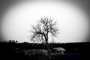 Solitary by Kaptive8