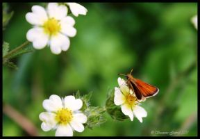 at rest by Nariane