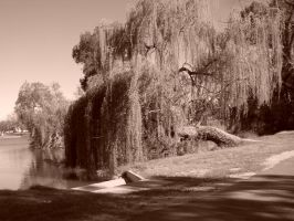 Weeping Willow-Stock by SilkenWebs