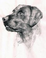 Dog -Labrador retriever by MariStella-K