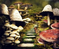 The Forest of Fungi by ti-DESIGN