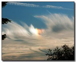 Sun Dog by ricmerry