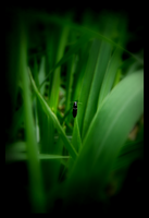 Lonely insect by BinaDog