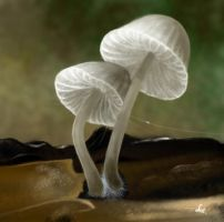 White Mushrooms by Svataben