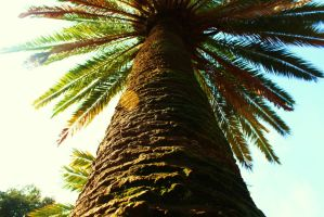 Up the Palm Tree by PhotonicBohemian
