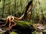 Ancient forest fo Yakushima Island by MColling