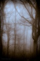 Mysterious by bamako