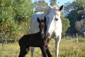 Warmblood mare and foal by PeanutGregory