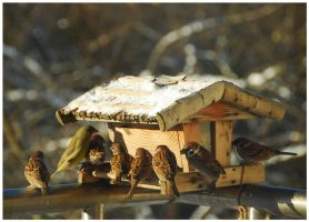 seven sparrows and greenfinch by Wilithin