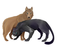 Panther and Wolf by Aelurus-Lupus