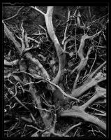 roots by vidi