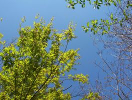 Sky and Leaves by Smirkat
