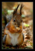 Squirrel. by Yaninah