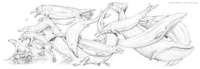 Cetacea: Back to the Sea (Whale Evolution) by Rhizae