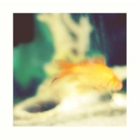 petit poisson by partiallyHere
