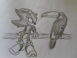 shadow and a Toco toucan by shadowhatesomochao