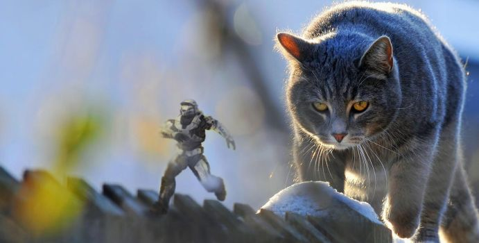 Halo vs Cat - Part 2 by Iceey23