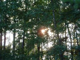 sun through trees by michelled85