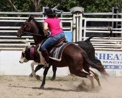 Stock - Horse Team Penning - 046 by aussiegal7