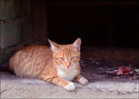 Ginger cat is full by Alsiza