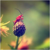 Little Creatures 061 by Frank-Beer