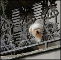 French Quarter Doggie by SalemCat