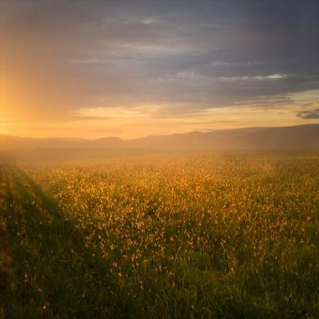 Golden Field Premade Background by little-spacey
