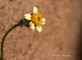 Flower-and-ants by fotoponono