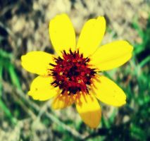 mellow yellow by dashedandshattered