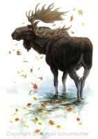 Moose Reflection by pallanoph