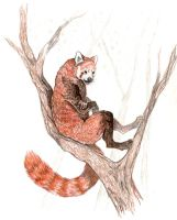 Red Panda by Wolfsjal